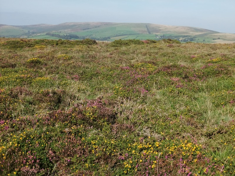 Heather, gorse and more