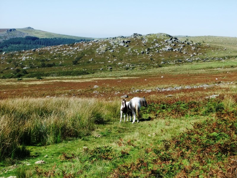 How Wild is Dartmoor